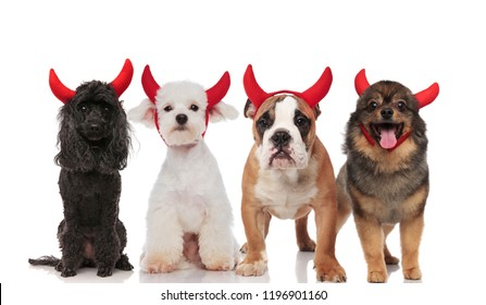 lovely group of four cute dogs dressed as devils standing and sitting on white background, wearing red horns