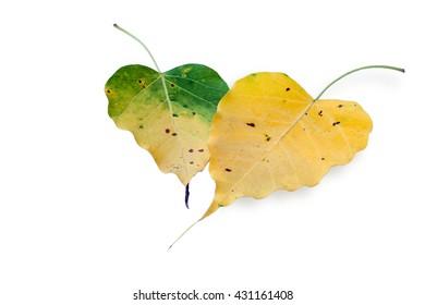 lovely heart Pho leaves buddhism religion symbol
