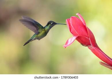 Lovely hummingbird feeding sweet flower nectar