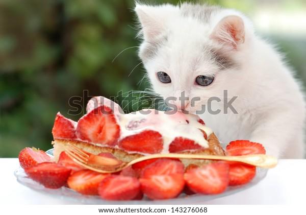 Lovely kitten eating  the strawberry cake with cream