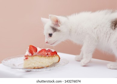 Lovely kitten looking at the piece of cake with strawberry