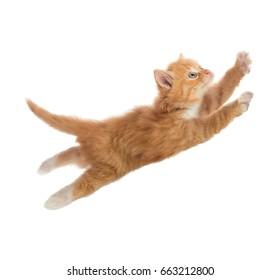 Schönes Kätzchen mit roter Farbe im Sprung. Einzeln. Eine Reihe von Bildern in verschiedenen Posen.