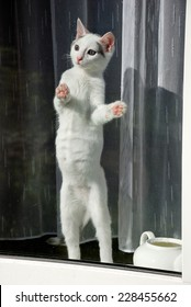 Lovely kitten standing on the hind legs on the window sill and looking through