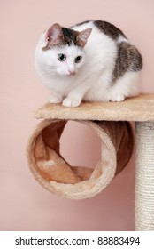 Lovely lady-cat sitting on the cat house