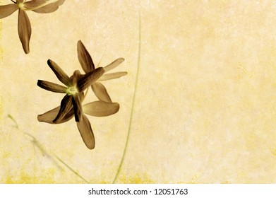 lovely light brown background image with interesting texture, floral elements and plenty of space for text