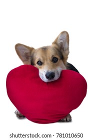 Lovely loving dog with a red heart on a white background.