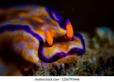 Lovely Macro shot Nudibranch