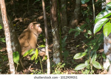 Lovely Monkey in Khao Yai National Park On the grass is sunbathing to relax naturally.