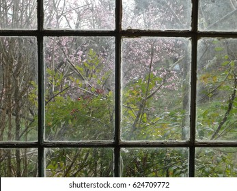 Lovely peach trees blossoming in early spring through a window, East Tennessee, USA.