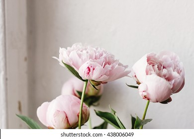 lovely peony pink and white flowers on background of wall,  sweet home, rustic