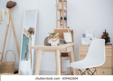 Lovely Persian cat lying in decorated room