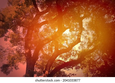 Lovely photo of autumn tree background with beautiful branches