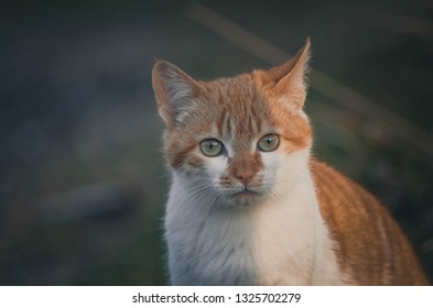 Lovely portrait of a cat in the field. Animal