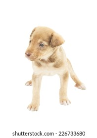 lovely puppy standing uncertainly on four paws