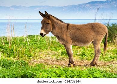 Lovely small donkey by the sa coast