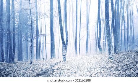 Lovely snowfall in foggy beech forest landscape. Winter season woodland background.