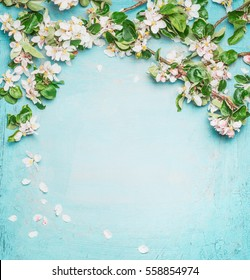 Lovely springtime turquoise  blue background with white blossom, top view, frame.  Springtime and nature concept