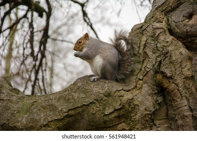 A lovely squirrel sitting on a tree branch nibbling nuts. The branch looks like a strong arm. Winter is hard time for animals.