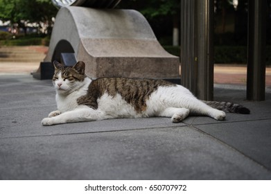 lovely street cat
