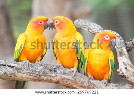 Lovely Sun Conure Parrot On Perch Stock Photo Edit Now 269769221