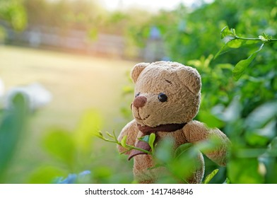 Lovely teddy bear in the garden.Nature background with copy space for design work. Concept about loneliness and thinking of someone.Planning for vacation time.Relaxing time with natural.