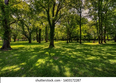Lovely Tree filled Meadow in the Tennessee Country side