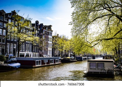 Lovely Trees Putting out their Spring Leaves over a Canal with Houseboats in the Jordaan District of Amsterdam, Netherlands