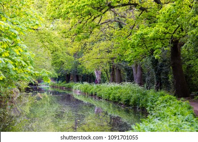 Lovely walkpath in springtime full of green trees and bush at Bansigstoke Canal in Woking, Surrey. Full frame horizontal landscape