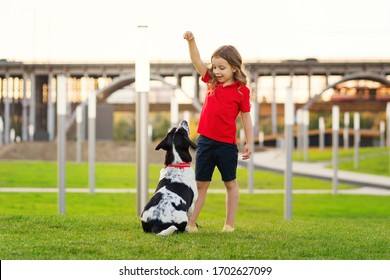 Lovely young girl in red t-shirt with a hunting dog the walk in the green grass on a sunny lawn. Child is training a dog. Obedience training. Children and animals. Faithful friends of human.