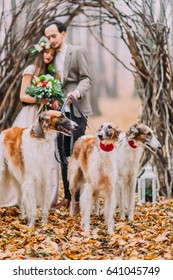 Lovely young wedding couple walking their collies in the autumn forest