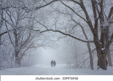Lovers walking in the snow laden forest