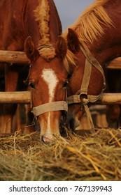 loving horses in the pen