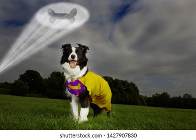 Low angle of a Sheepdog dressed as a superdog,  with a spotlight in the shape of a bone projected overhead