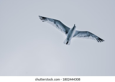 A low angle shot of a flying gull bird with its wings spread wide