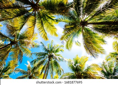 A low angle shot of palm trees under a blue cloudy sky  - perfect for background