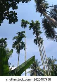 Low angle shot of tropical garden with blue sky scene.