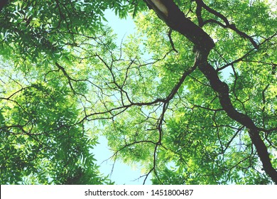 Low angle of tree branches leaves and sky.