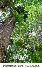 Low angle of tree in rainforest of Malaysia.