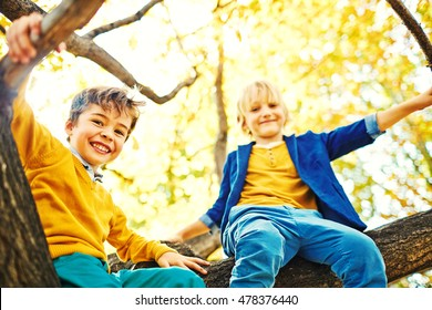 Low angle of two school age boys exploring park, climbing tree and sitting high up among braches, looking happily down at camera and  enjoying play time on warm autumn day