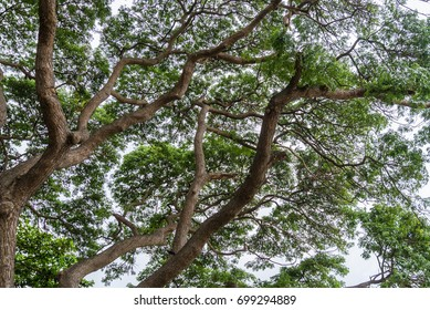 Low angle under big tree Nature composition.Nature background.