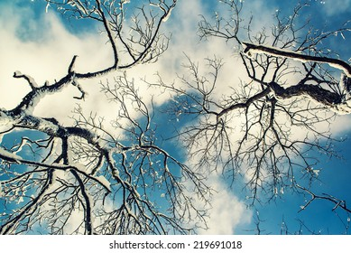 A low angle view from below of tree branches covered in snow against white clouds in a blue sky during the winter season.  Filtered for a retro, vintage look.