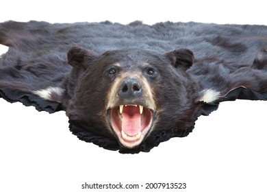 A low angle view of a black bearskin rug isolated on white with focus on the head