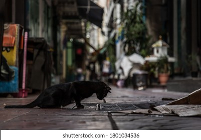 Low angle view of a Black stray cat looking down into the pipe cover on the stree in alley. Selective focus.