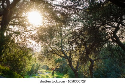 Low angle view of bright sun from amidst the trees, Athens, Greece