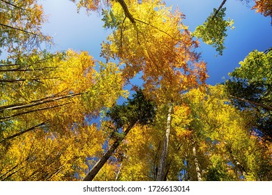 Low angle view of colorful treetops on blue sky backgrounds in autumn.