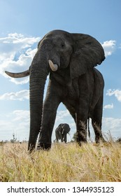 Low angle view of elephant