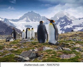 Low angle view of group of king penguins standing tall against the backdrop of craggy mountains during mating season on South Georgia Island in the South Atlantic Ocean.
