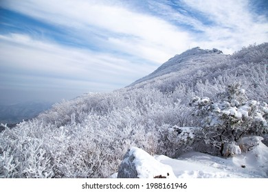 Low angle view of hoarfrost on the trees of Mudeungsan Mountain at Dong-gu near Gwangju, South Korea
