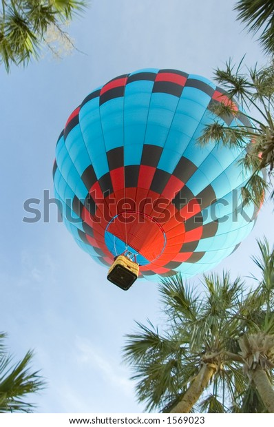 low angle view of hot air balloon over palm tree tops in south florida