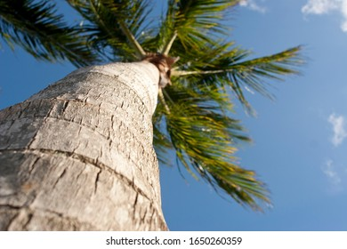 Low angle view looking up the trunk of a palm tree in Florida.